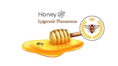 Photo of اپی ژنتیک و پتانسیل بازسازی سلولی پروتئین ملکه ساز رویالاکتین زنبور عسل در صنعت کازمتیک