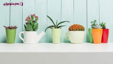 Photo of آشنایی با گیاهان آپارتمانی تصفیه کننده هوا ؛ ویژگی ها و شرایط نگهداری