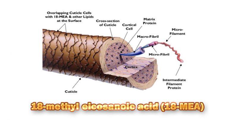 Photo of نگاهی گذار به نقش لایه چربی پوشاننده کوتیکول مو در سلامت و زیبایی موی سر