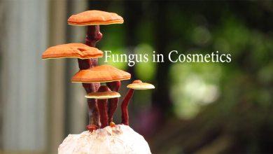 Photo of نگاهی گذرا به کاربرد و خواص قارچ ها در صنعت کازمتیک