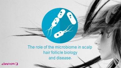 Photo of نگاهى گذرا به نقش میکروبیوم پوست سر در سلامت مو